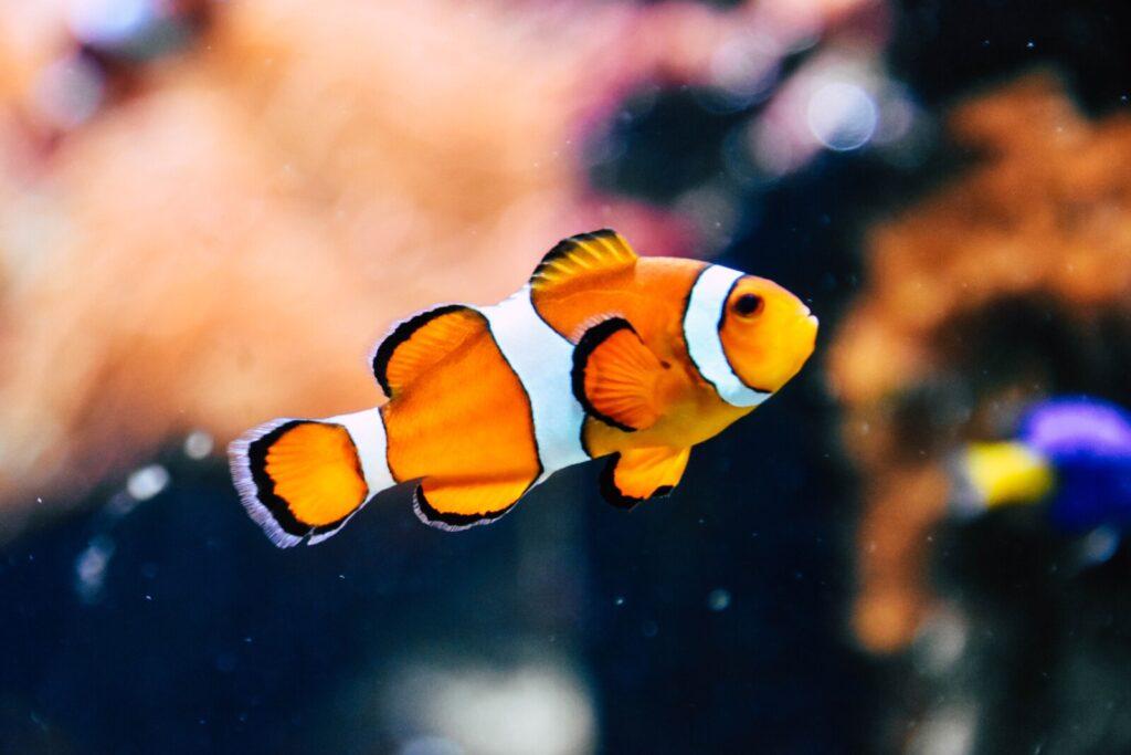 En frisk fisk lever ikke på land