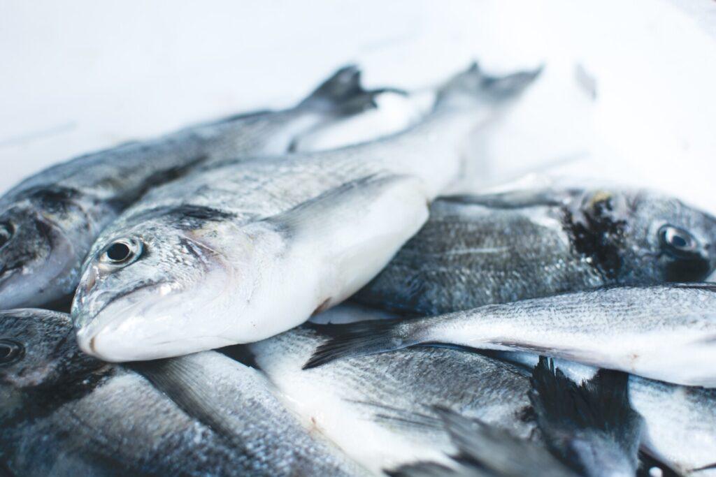 Er en fisk på land syk?
